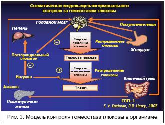 Рис. 3. Модель контроля гомеостаза глюкозы в организме