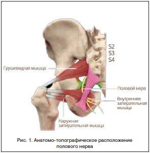 Лечение спазма мышц тазового дна в киеве