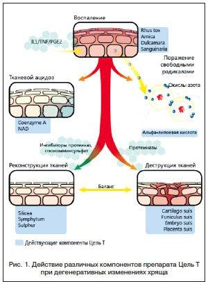 комплексные схемы терапии