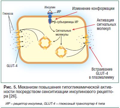 Глюкозный транспортер глют 4 фольксваген транспортер купить новый бу