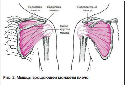 Алгоритм поиска болей в суставах мышца слабая доктор ше суставы коленые хрустят бодибилдинг