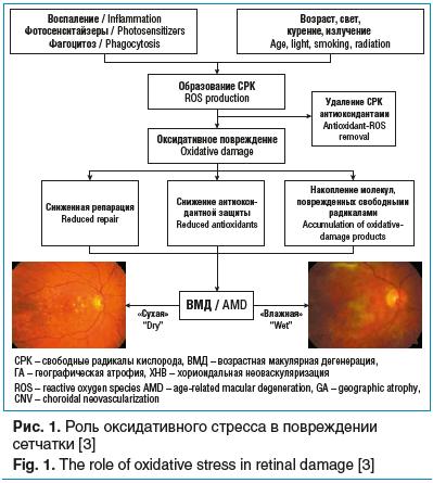Рис. 1. Роль оксидативного стресса в повреждении сетчатки [3]