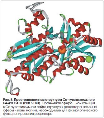 Рис. 6. Пространственная структура Са-чувствительного белка CASR (PDB 5 FBH).
