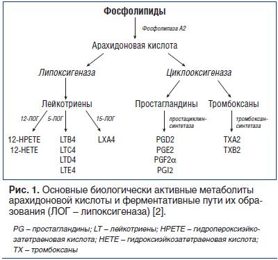 Рис. 1. Основные биологически активные метаболиты арахидоновой кислоты и ферментативные пути их образования (ЛОГ – липоксигеназа) [2].