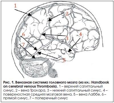 Рис. 1. Венозная система головного мозга (из кн.: Handbook on cerebral venous Thrombosis).