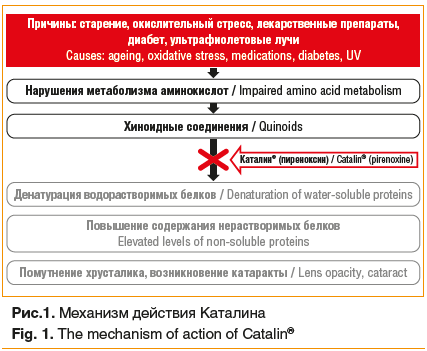 Рис.1. Механизм действия Каталина Fig. 1. The mechanism of action of Catalin®