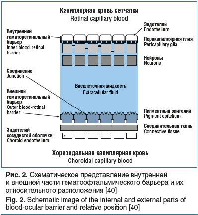 Рис. 2. Схематическое представление внутренней и внешней части гематоофтальмического барьера и их относительного расположения [40]