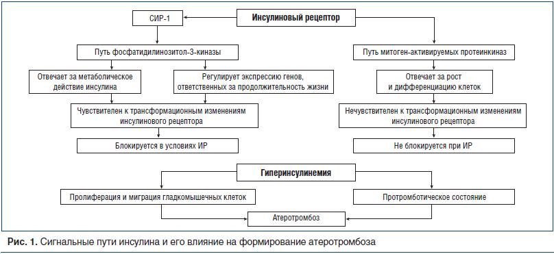 Рис. 1. Сигнальные пути инсулина и его влияние на формирование атеротромбоза