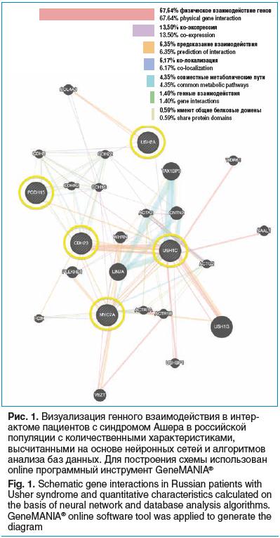 Рис. 1. Визуализация генного взаимодействия в интерактоме пациентов с синдромом Ашера в российской популяции с количественными характеристиками, высчитанными на основе нейронных сетей и алгоритмов анализа баз данных. Для построения схемы использован onlin