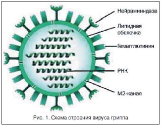 Национальные рекомендации по диагностике и лечению гриппа thumbnail