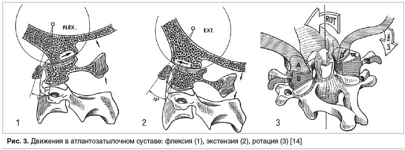 Рис. 3. Движения в атлантозатылочном суставе: флексия (1), экстензия (2), ротация (3) [14]